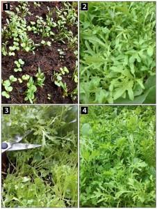 Salad-Update-Panel