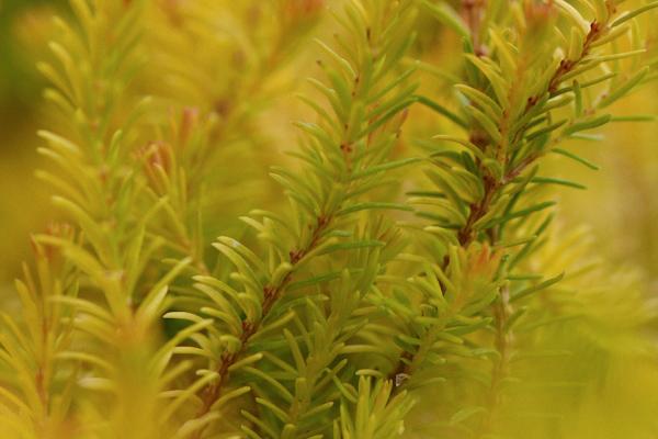 Heather-Foliage-1