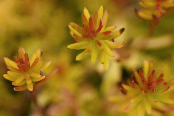 Heather-Foliage-2