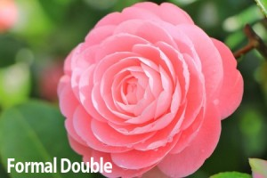 Formal-Double-Camellia