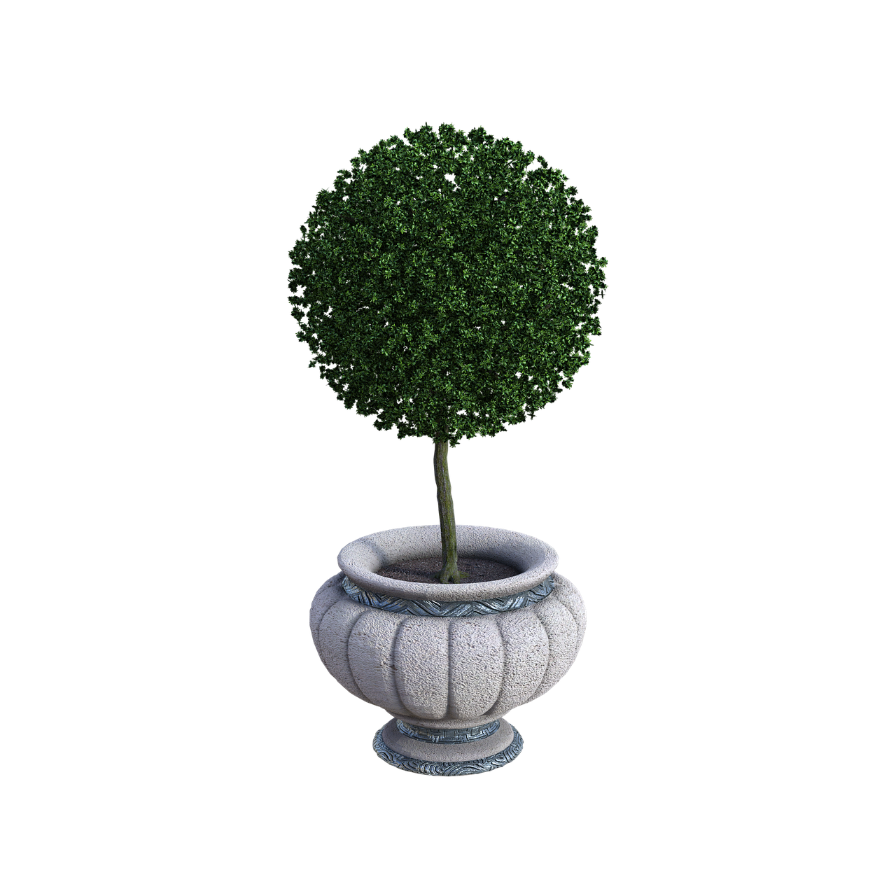 potted plant, trimmed, pot